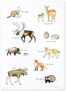 Däggdjursaffisch